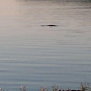 whale0.jpg